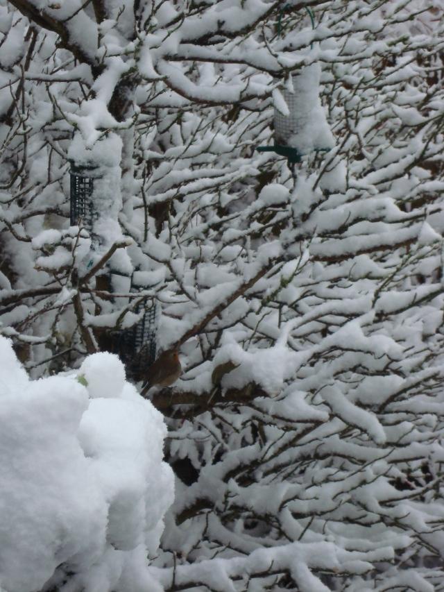 Winter Robin (13)