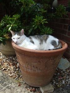 Maisy Plant