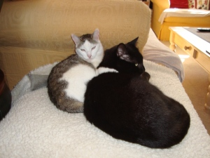 Maisy & Eddie Have the Right Idea Keeping Warm(c) copyright Sherri Matthews 2013