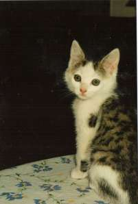 Maisy as a kitten