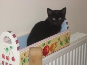 Eddie As A Kitten(c) copyright Sherri Matthews 2013