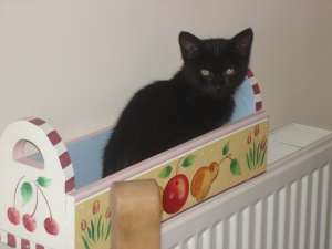 Eddie As A Kitten(c) copyright Sherri Matthews 2013