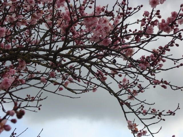 Spring Blossom(c) copyright Sherri Matthews 2013