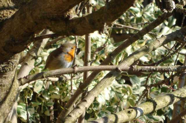 Sweet Robin In The Tree(c) Copyright Sherri Matthews 2013