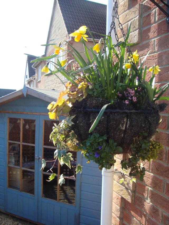 Spring-Time Hanging Basket(c) copyright Sherri Matthews 2013