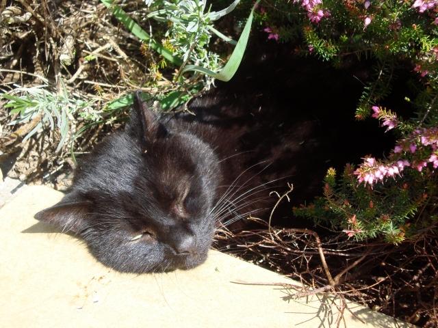 Eddie Sleeping on the Job (c) copyright Sherri Matthews 2013