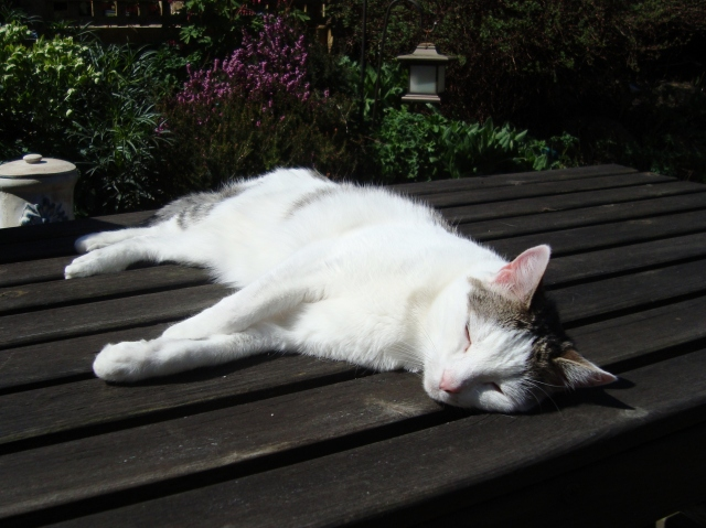 Maisy Sunbathing (c) copyright Sherri Matthews 2013