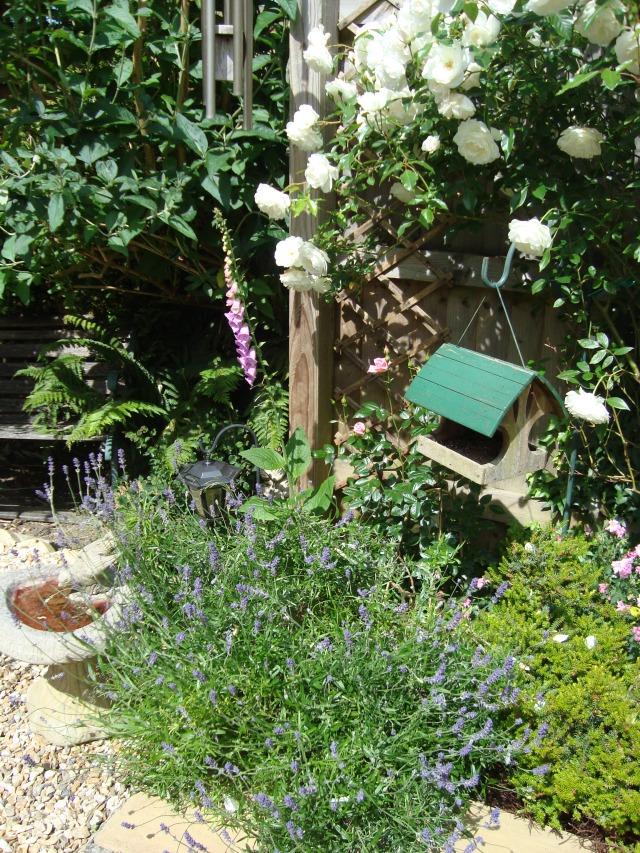 My Garden (c) Copyright Sherri Matthews 2013