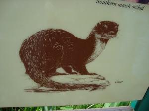 Sketch of an Otter taken at a Nature Reserve Norfolk Broads (c) Sherri Matthews 2013