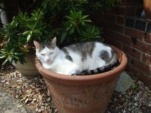 Maisy in a Pot (c) copyright Sherri Matthews 2013