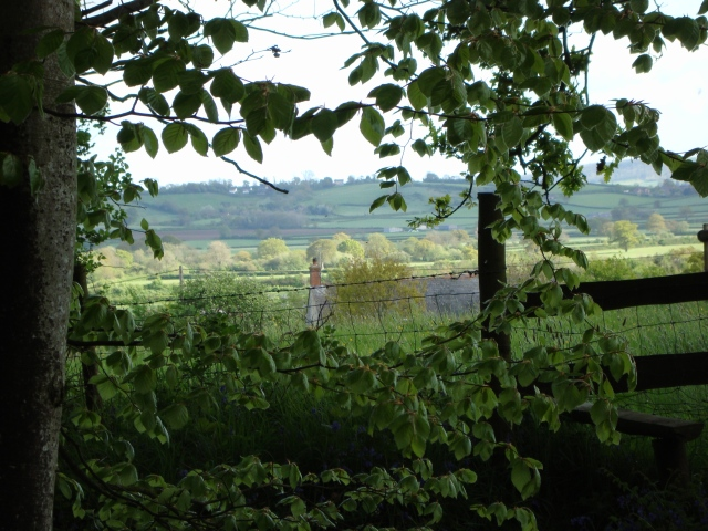 Bluebell Woods Dorset (c) copyright Sherri Matthews 2013
