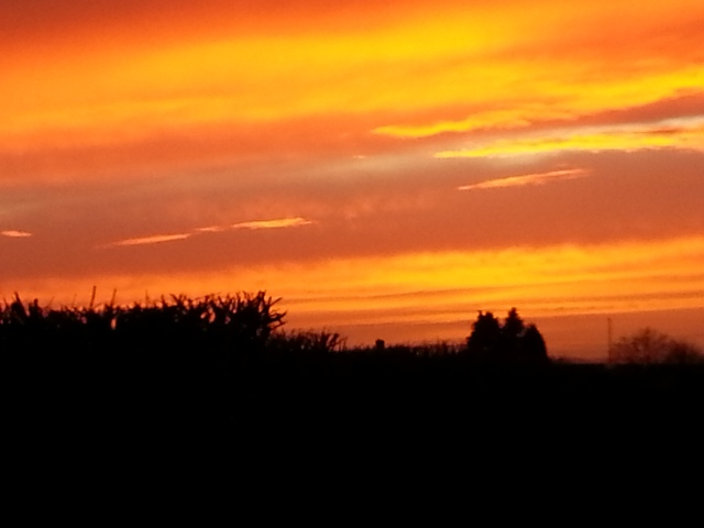 Glorious December Sunset in Somerset (c) copyright Sherri Matthews