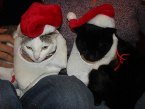 Maisy & Eddie love their new made-for-cats Santa hats, complete with Santa beard (c) Sherri Matthews 2013