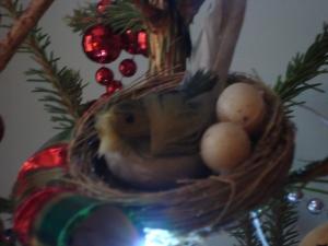 Cosy Christmas Nest! (c) Sherri Matthews 2013