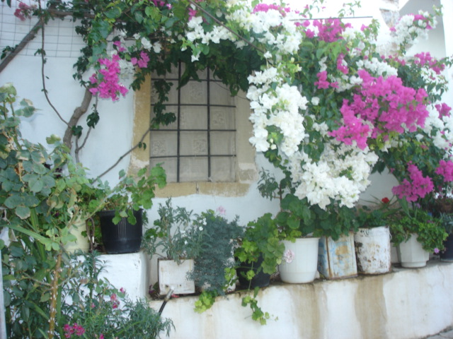 I love the way these flowering vines grow around many of the windows.  A beautiful and natural way to deflect the searing heat of the day away from the window. Pefki Village, Crete (c) Sherri Matthews 2008