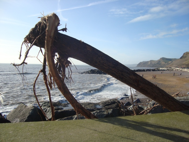Driftwood at West Bay (c) Sherri Matthews 2014