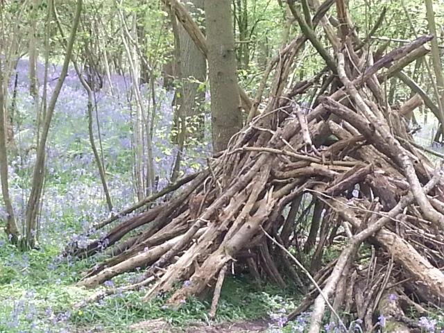 Duncliffe Woods, Dorset (c) Sherri Matthews 2014