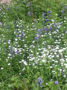 Duncliffe Bluebell Woods May 2014 (28)