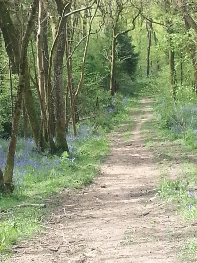 Path to Duncliffe Woods, Dorset (c) Sherri Matthews 2014