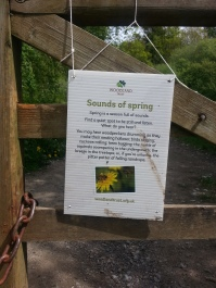 Duncliffe Bluebell Woods May 2014 (3)