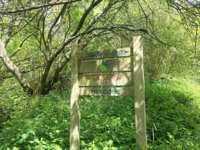 Entrance to Duncliffe Woods, Dorset UK (c) Sherri Matthews 2014
