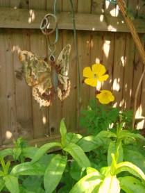 Garden May 2014 (25)