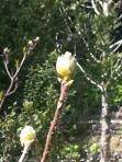 Mintern Magna Easter 2014 (13)