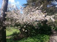 Mintern Magna Easter 2014 (3)