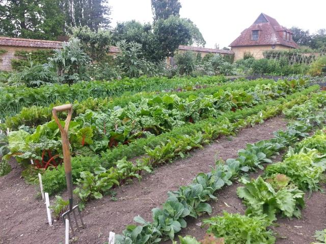 Is that Mr McGregor's garden fork ? (c) Sherri Matthews 2014