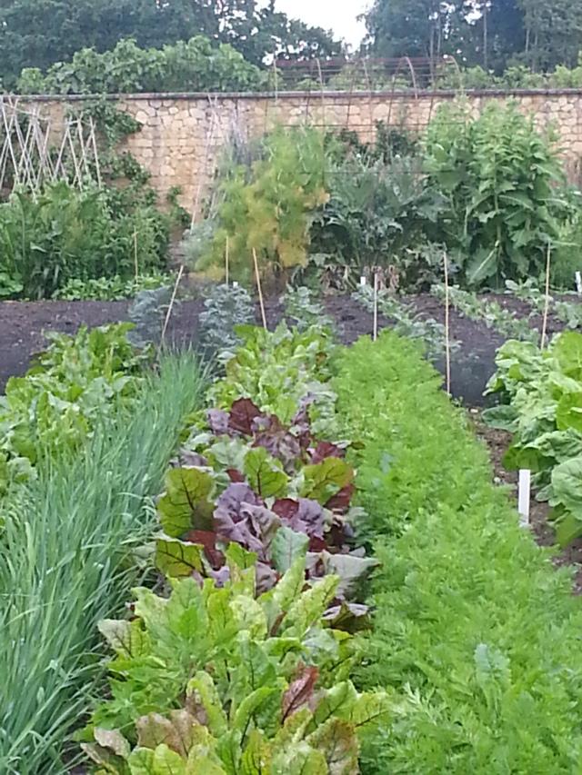 Kitchen Gardens, Barrington Court (c) Sherri Matthews 2014