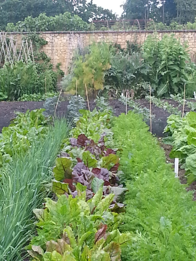 Kitchen Gardens, Barrington Court (c) Sherri Matthews 2014