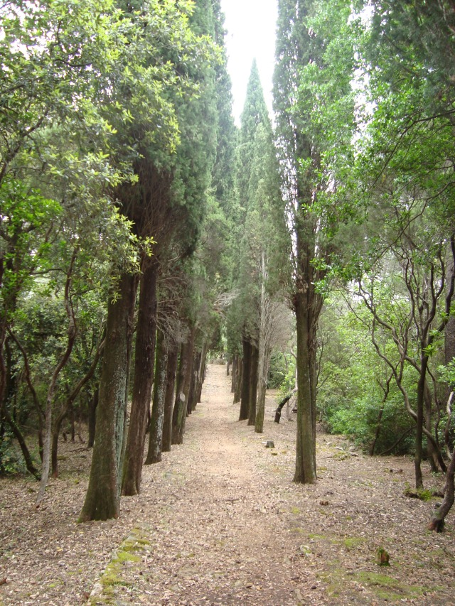 A cooling walk between the tall pine trees on Lokrum (c) Sherri Matthews 2014