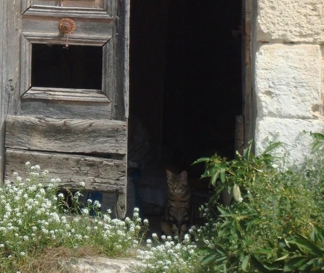 Village cat (of many!) (c) Sherri Matthews 2014