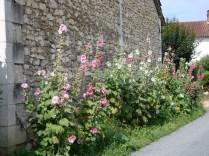 A walk around the village (5)