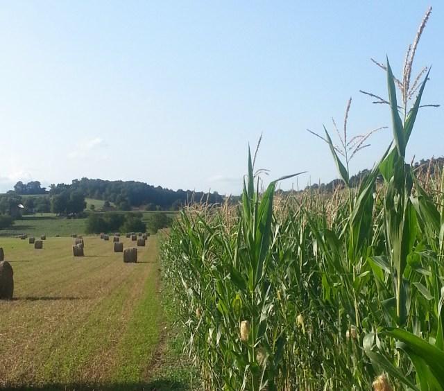 Field in France (c) Sherri Matthews 2014