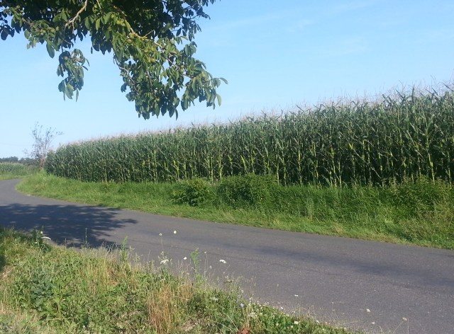 Village road - France (c) Sherri Matthews 2014