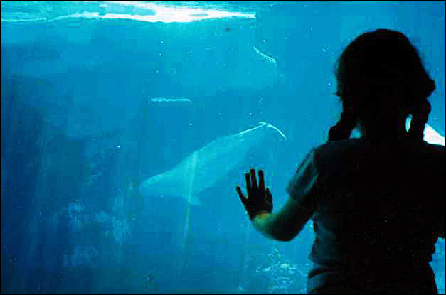 My daughter at Sea World, San Diego CA, 2003 (c) Sherri Matthews 2014