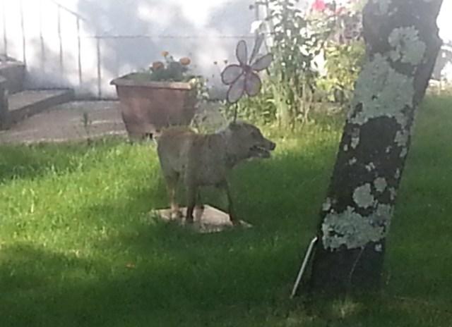 Stuffed dog/fox with a pinwheel stuck to its head...bizarre! (c) Sherri Matthews 2014