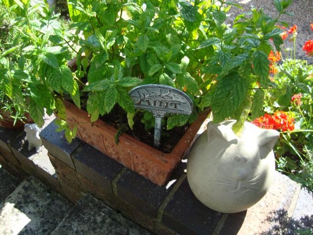 Garden Mint