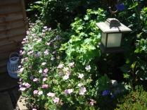 June Garden 2014 (12)