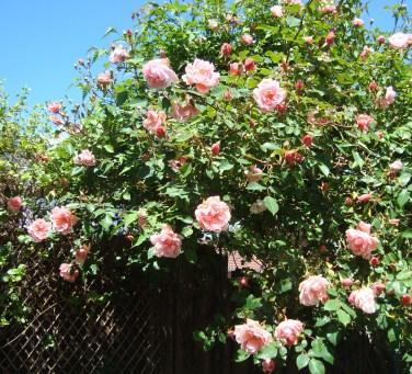 June Garden 2014 (2)