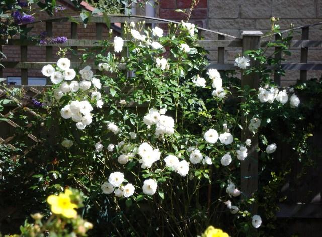 Summer Garden Aug 2014 (2)