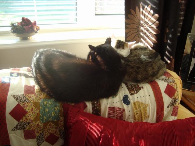 Cats Basking in Slices of Light (c) Sherri Matthews