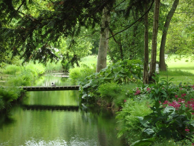 Duck on Bridge.  Ranworth, Norfolk Broads June 2013 (c) Sherri Matthews