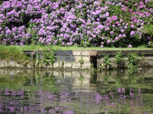 Neatishead - Norfolk Broads June 2013 (c) Sherri Matthews