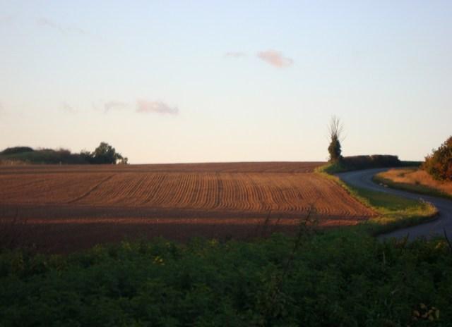Field in a Suffolk October, 2011 (c) Sherri Matthews