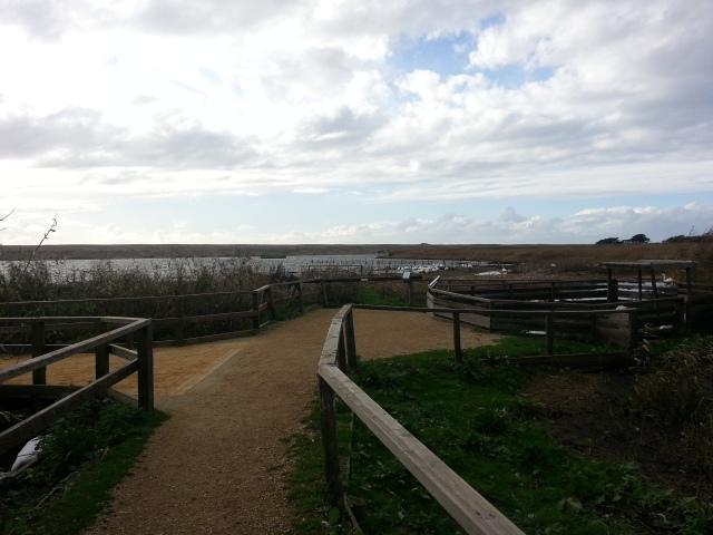 Views of Lyme Bay (c) Sherri Matthews 2014