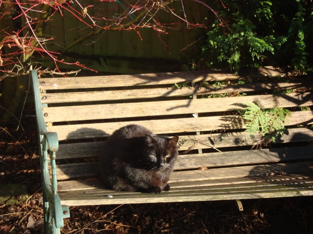 Eddie Sunbathing On Bench January 2015 (c) Sherri Matthews