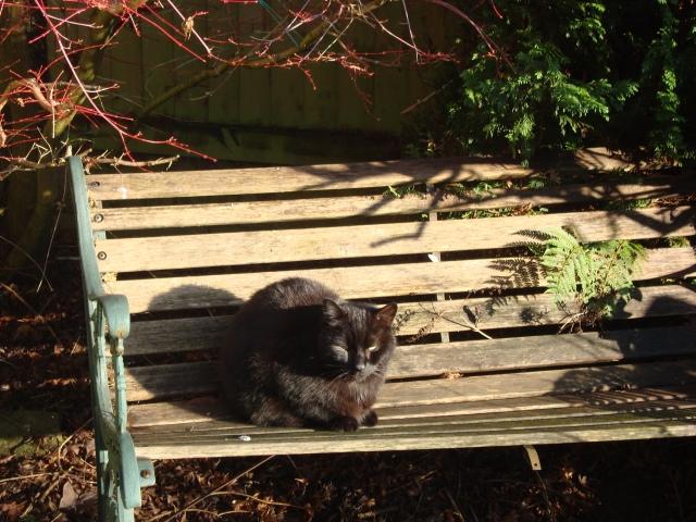 Eddie Sunbathing On Bench January 2015 (c) Sherri Matthews
