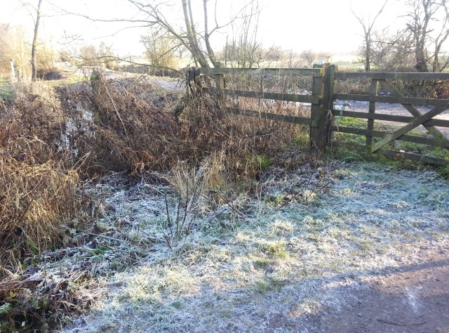 Somerset Frost December 2014 (c) Sherri Matthews